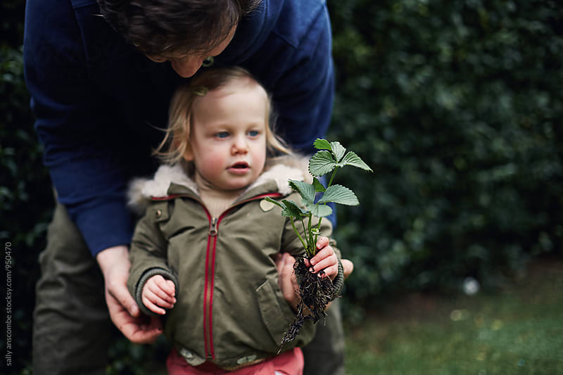 Little girl holding a strawberry plant by sally anscombe for Stocksy United