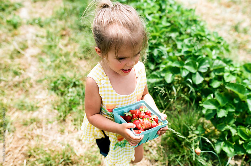 little girl holding a basket of strawberries by Maria Manco for Stocksy United