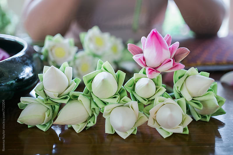 Traditional folding of Lotus Flowers as offering at Buddhist Temples by Rowena Naylor for Stocksy United