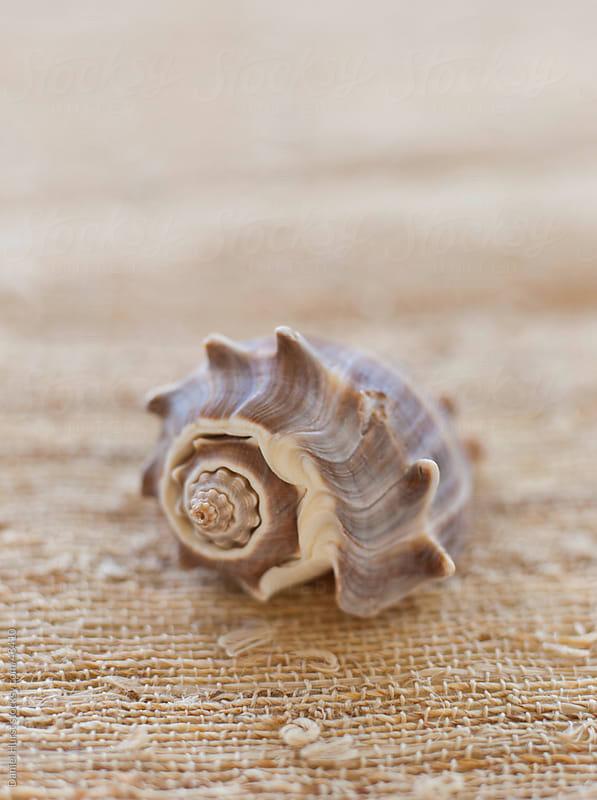 Closeup of shell  by Daniel Hurst for Stocksy United