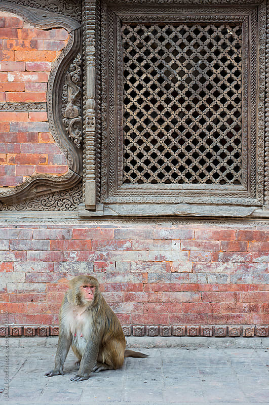Monkey on a nepali temple by Bisual Studio for Stocksy United