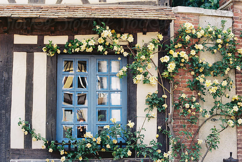 rustic blue window with yellow roses by Léa Jones for Stocksy United
