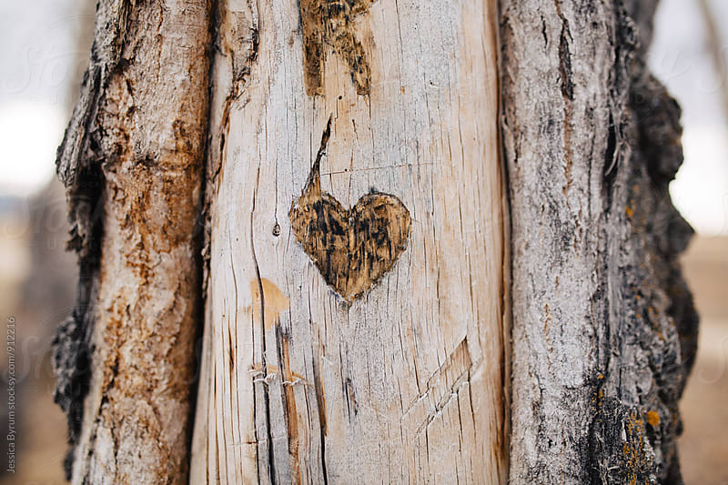 Heart carved into aspen tree by Jessica Byrum for Stocksy United