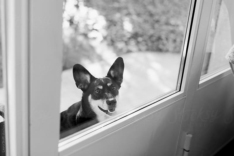 Black and white image of little dog waiting out of the door by Laura Stolfi for Stocksy United