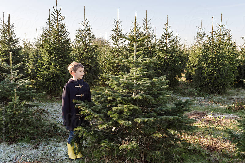 Boy guards his chosen Christmas tree by Rebecca Spencer for Stocksy United