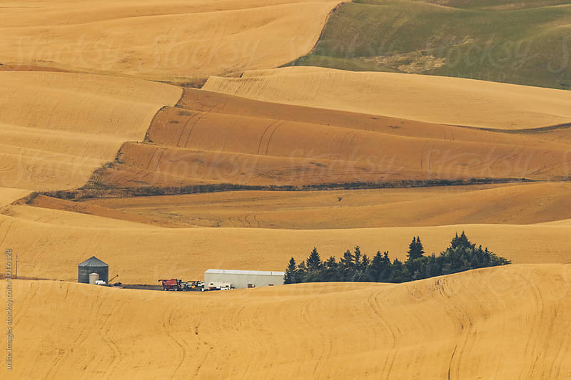 landscape of palouse, WA by yuanyuan xie for Stocksy United