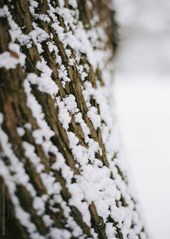 Close up of snow on the bark of a tree.  by Kirstin Mckee for Stocksy United