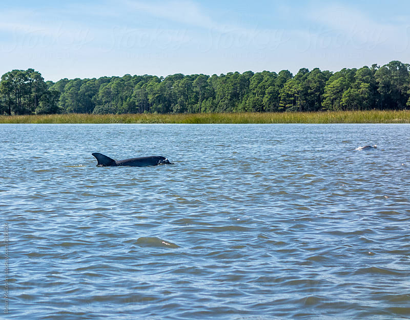 Dolphin Spotted During Kayaking Trip in Carolina Low Country by Brian McEntire for Stocksy United