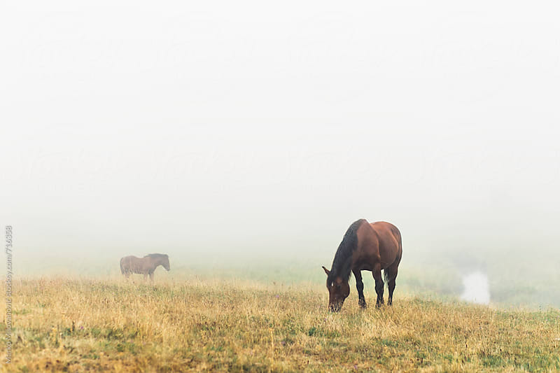 Horses on the foggy mountain by Marko Milovanović for Stocksy United