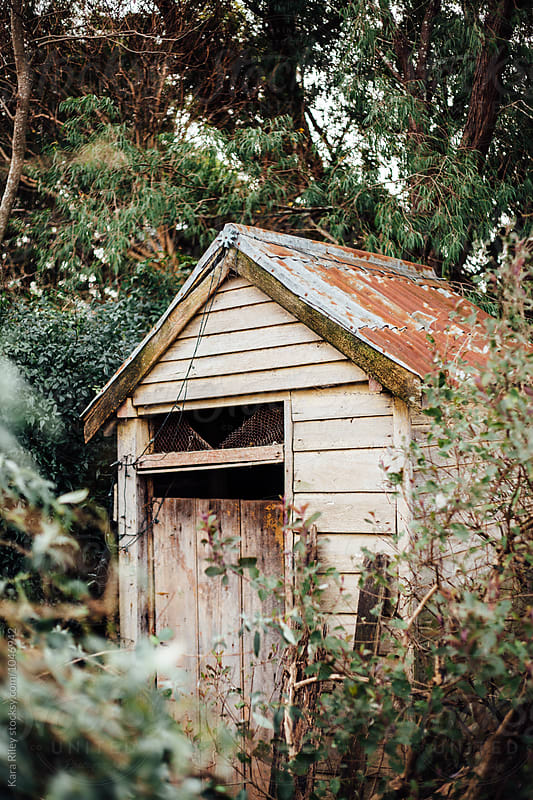 Old wooden Outhouse in Bush by Kara Riley for Stocksy United