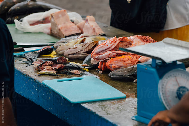 Ecuadorian Fish Market by Richard Brown for Stocksy United