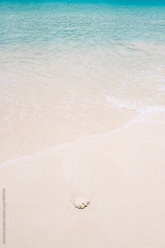 Piece of coral on the beach sand by michela ravasio for Stocksy United