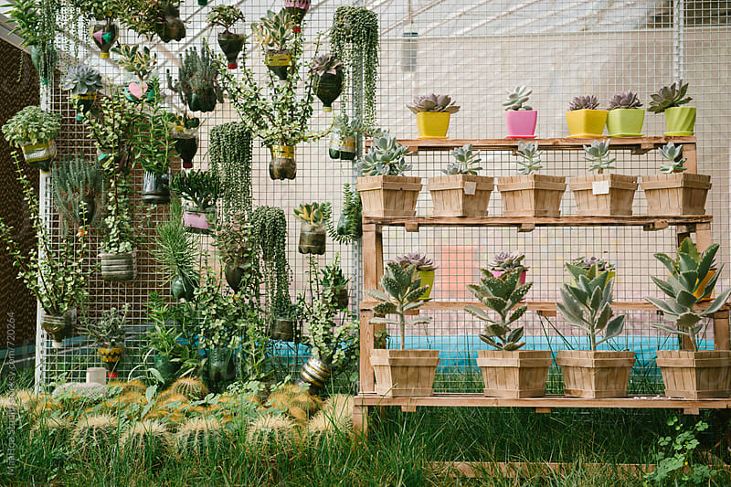 A large collection succulent plants in greenhouse by MaaHoo Studio for Stocksy United