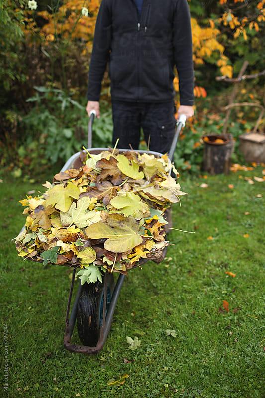 Man with a wheelbarrow filled with autumn leaves by Marcel for Stocksy United