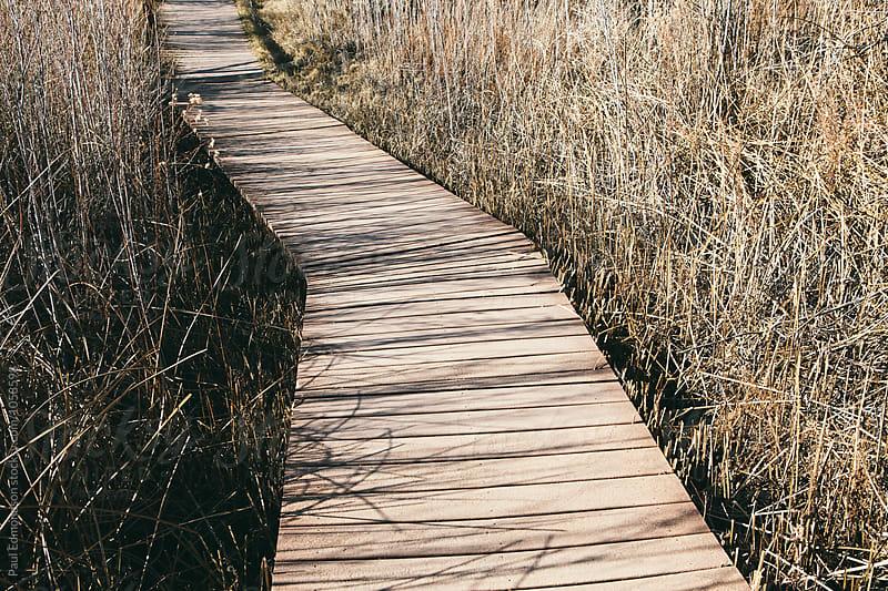 Boardwalk through tallgrass marsh, near Joshua Tree NP, CA, USA by Paul Edmondson for Stocksy United