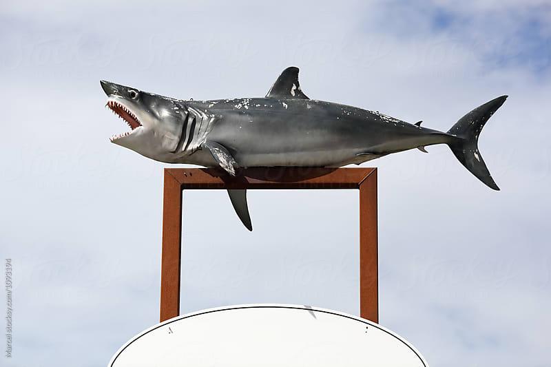 Model shark by Marcel for Stocksy United