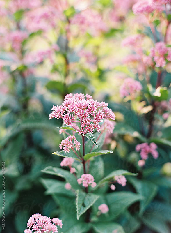 garden spring blooms by Vicki Grafton Photography for Stocksy United