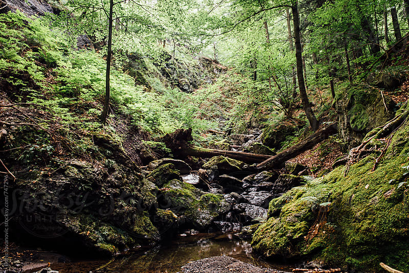 Beautiful forest stream landscape by Boris Jovanovic for Stocksy United
