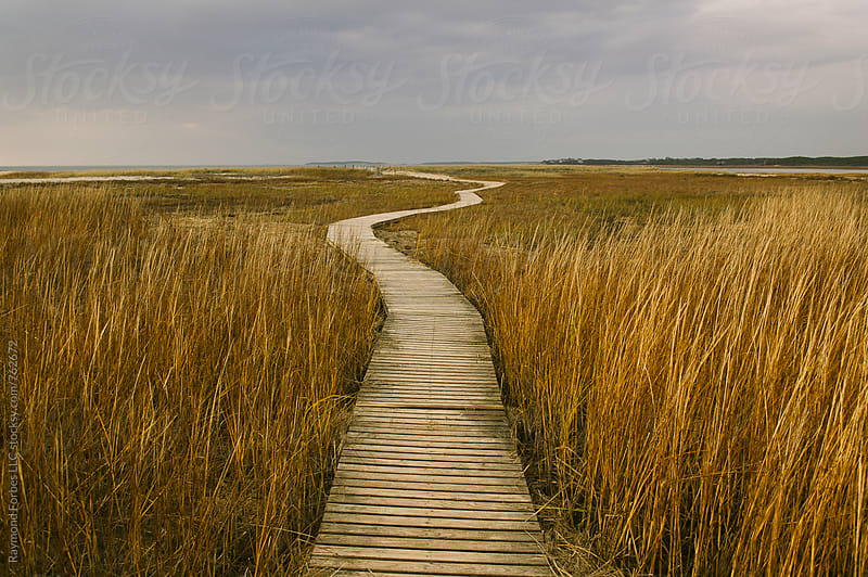 Boardwalk in Autumn Marsh Cape Cod by Raymond Forbes LLC for Stocksy United