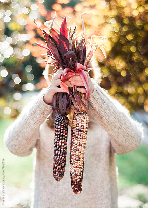Gathering Indian Corn by Marta Locklear for Stocksy United
