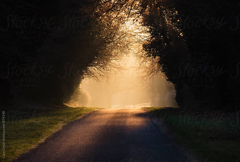 Sunrise through mist on remote rural road. Hilborough, Norfolk, UK. by Liam Grant for Stocksy United