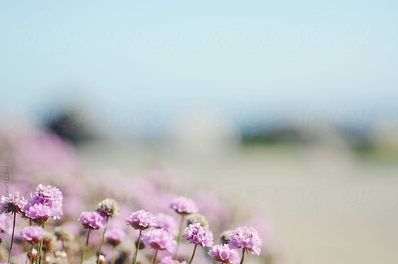Flowers on the beach by Chelsea Victoria for Stocksy United
