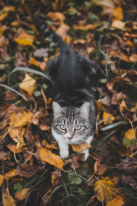 Adorable big eyed and mixed race cat looking at the camera by Sanja (Lydia) Kulušić for Stocksy United