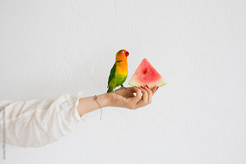 Parrot eating a watermelon while standing on girl's hand by Jovana Rikalo for Stocksy United