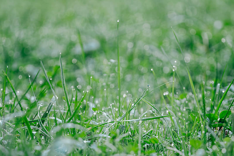 Fresh green grass and weeds in the morning with dewdrops  by Jordi Rulló for Stocksy United