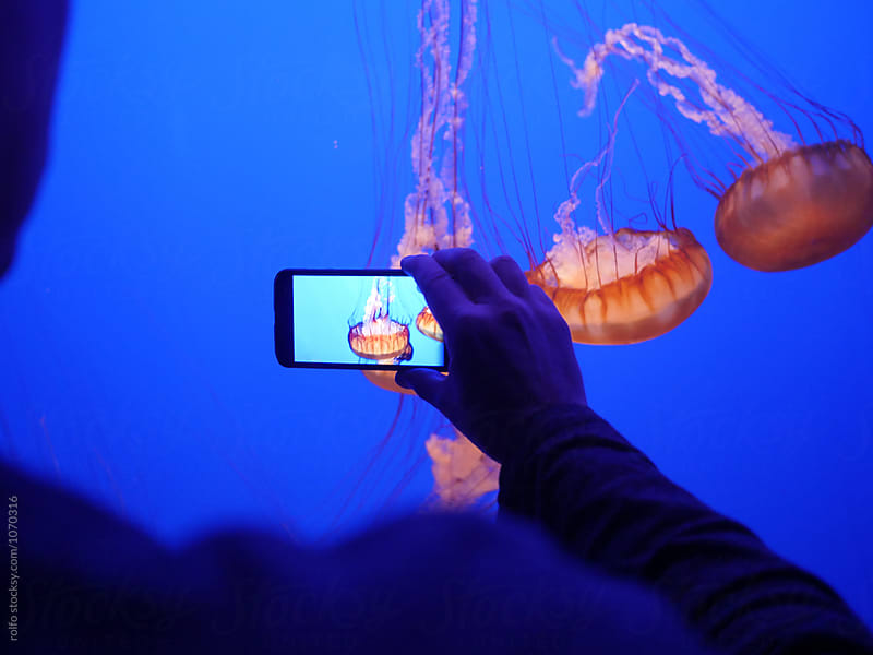 Man holding phone while taking shot of jellyfishes  by rolfo for Stocksy United