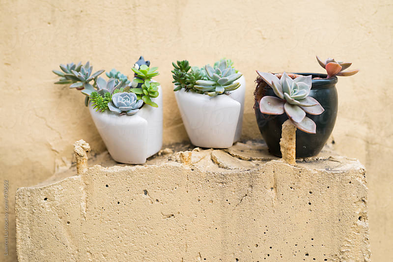 Succulent plants on the salient of the wall by Lawren Lu for Stocksy United