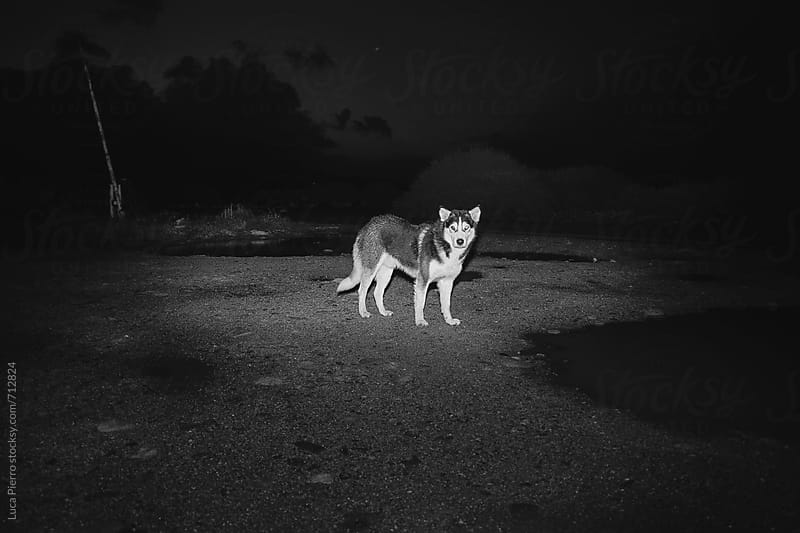 Abandoned stray dog  by Luca Pierro for Stocksy United