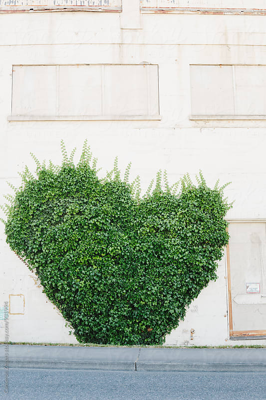 heart shaped ivy on side of building by Cameron Zegers for Stocksy United