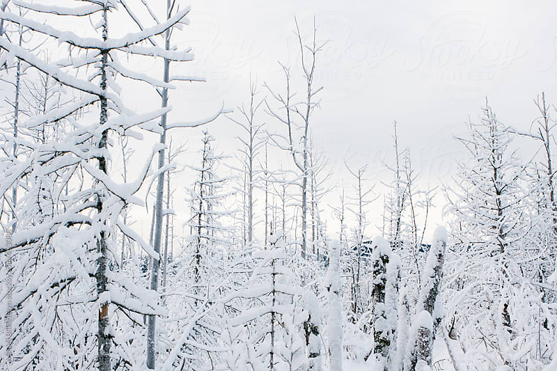 Deep snow covered forest in the winter by Mihael Blikshteyn for Stocksy United