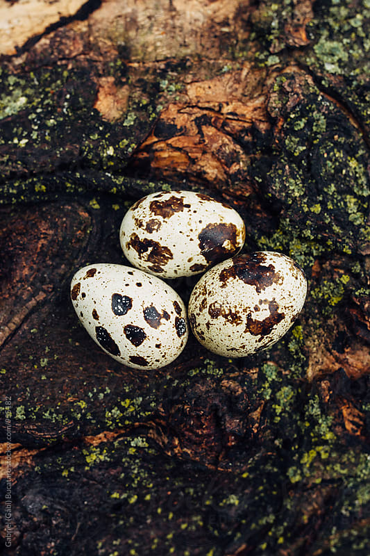 Quail eggs on a wooden log by Gabriel (Gabi) Bucataru for Stocksy United