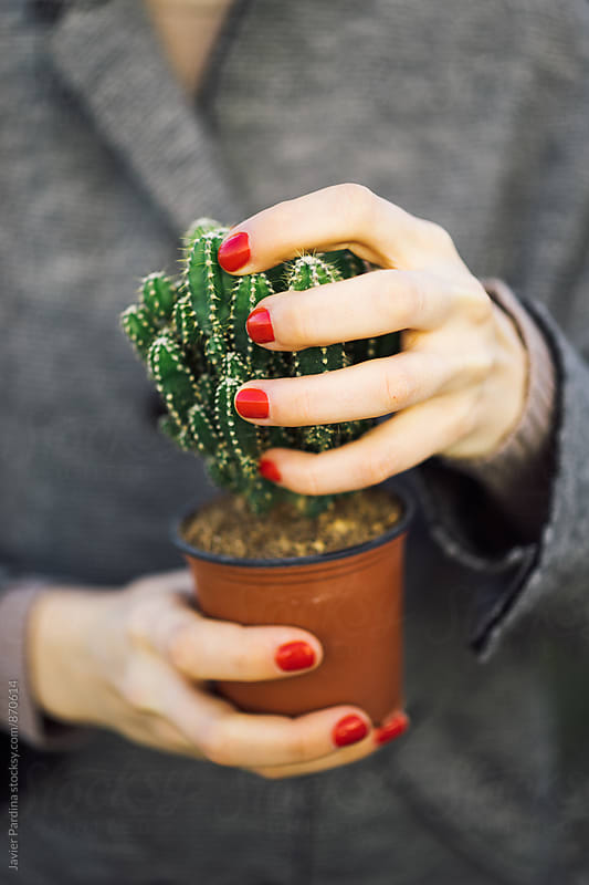hands squeeze cactus by Javier Pardina for Stocksy United