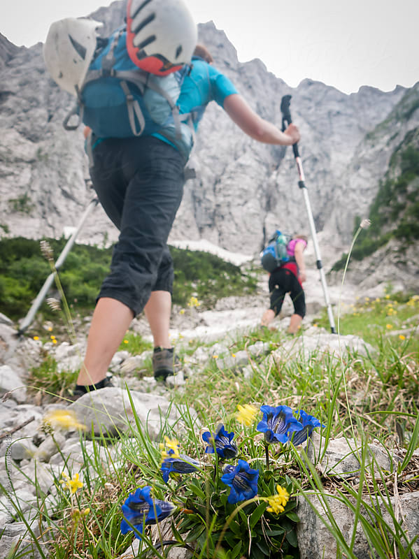 Two climbers walking to the rocks by the flowers by Martin Matej for Stocksy United
