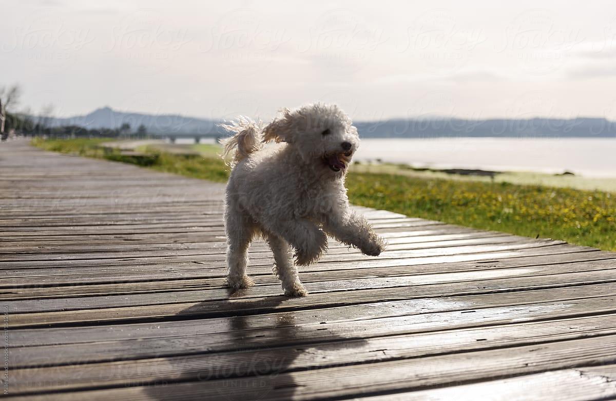 Cute Dog Running On Walkway Stocksy United