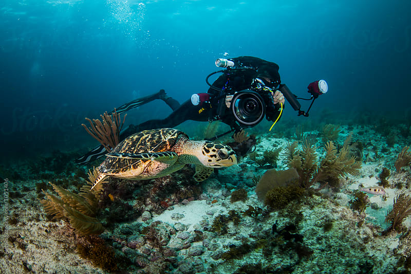 A underwater photographer shooting sea turtle in Caribbean sea by Song Heming for Stocksy United