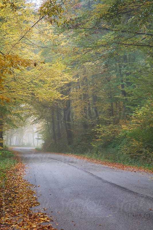 Autumn forest road by Pixel Stories for Stocksy United