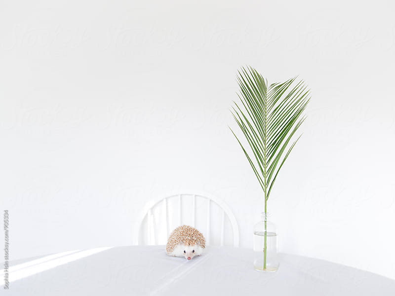 Hedgehog with palm leaf by Sophia Hsin for Stocksy United
