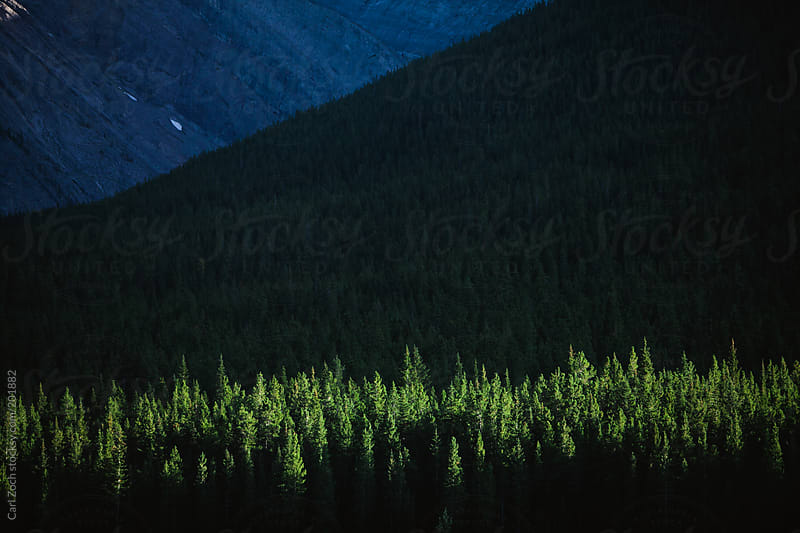 Dramatic Forest Light by Carl Zoch for Stocksy United