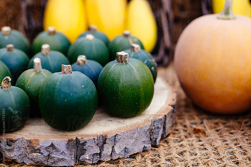 Small pumpkins by Andrey Pavlov for Stocksy United