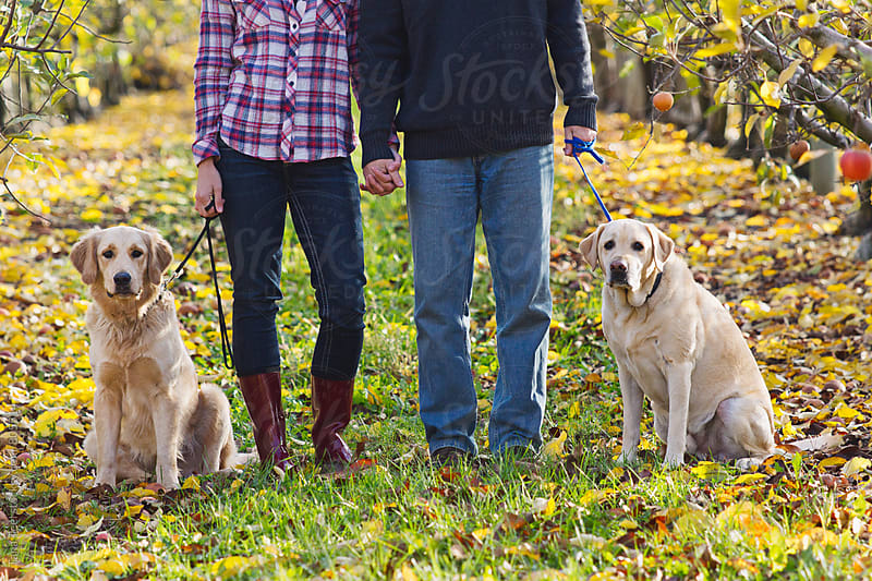 Dogs look at camera while owners hold leashes by Tana Teel for Stocksy United