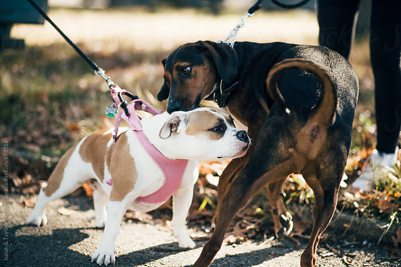 Dogs sniffing butts by Isaiah & Taylor Photography for Stocksy United