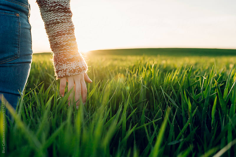 Young woman with jeans touching straws in the green fields and sunset moment by Jordi Rulló for Stocksy United