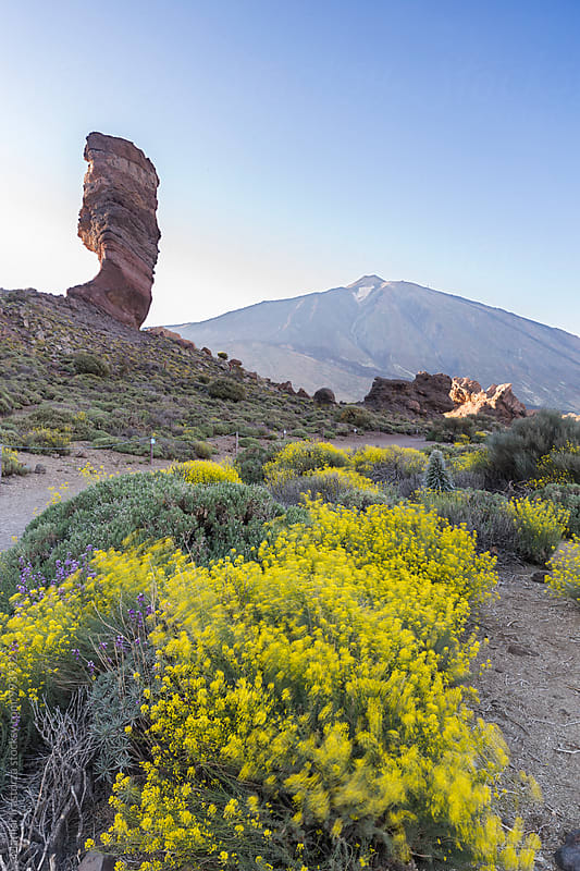 Teide Mountain Volcano National Park by Marilar Irastorza for Stocksy United