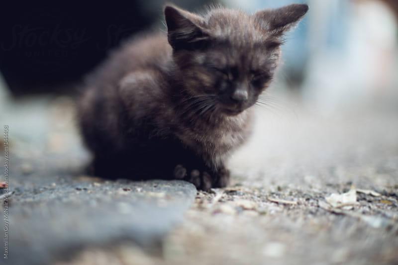 Stray Kittens of Napoli by Maximilian Guy McNair MacEwan for Stocksy United
