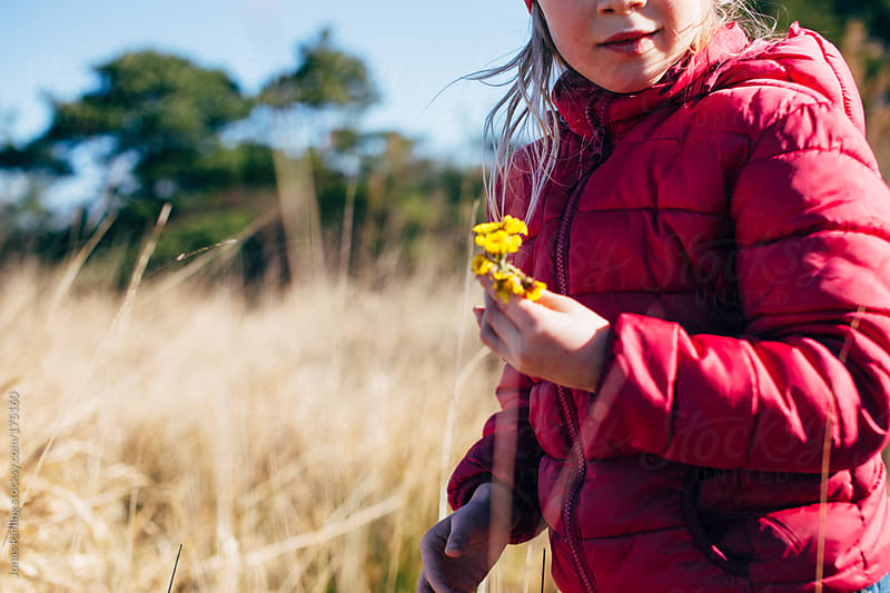 Girl picking coltsfoot flowers in the spring by Jonas Räfling for Stocksy United