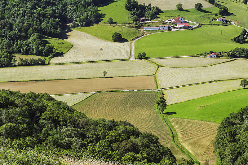Aerial view of cultivated fields by Luca Pierro for Stocksy United